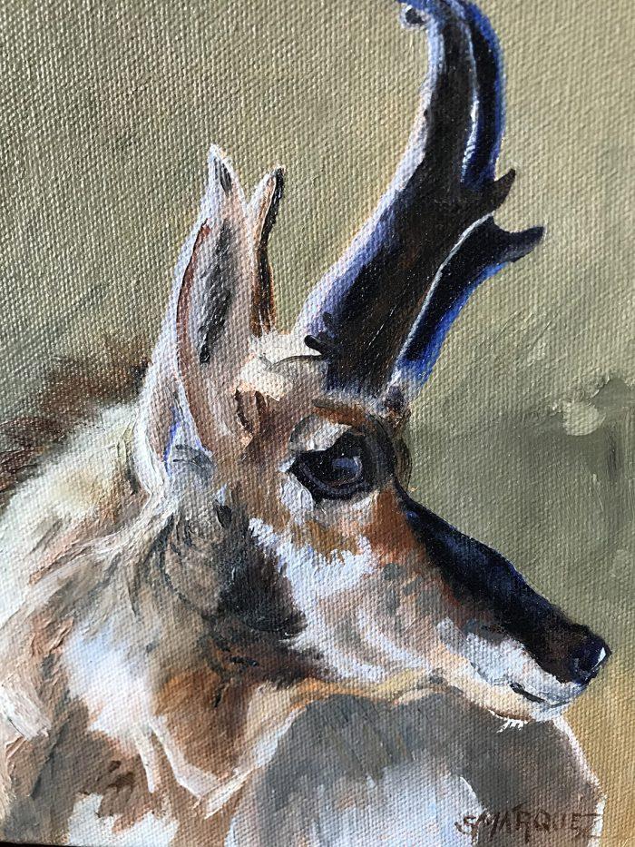 Pronghorn Antelope Oil Painting